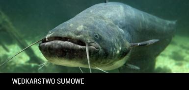 Wêdkarstwo sumowe - jak ³owiæ sumy?    porady, metody - wedkuje.pl