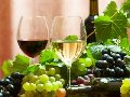 Wino i Winiarstwo - mi³o¶nicy wina   wêdkarstwo - wedkuje.pl