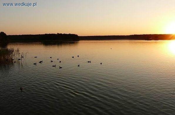 SZCZUPAK Z JEZIORA, gdzie z³owiæ szczupaka w jeziorze | ³owiska wêdkarskie - wedkuje.pl