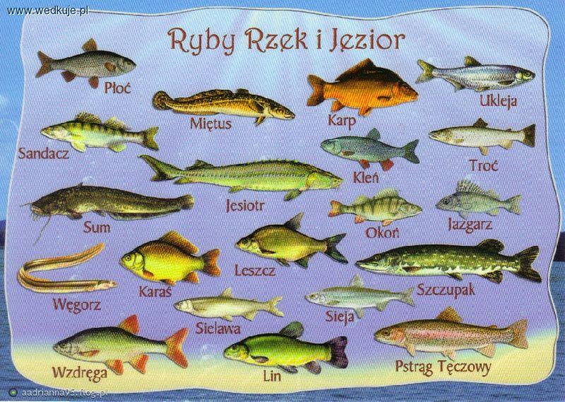 Ryby wystêpuj±ce w Polsce, ryby w polskich rzekach, ryby w polskich jeziorach