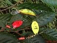 Rodzaje wobler�w, blachy spiningowe, b�ystki w�dkarskie