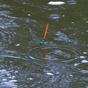 Filmy wêdkarskie sp³awikowe, wêdkowanie sp³awikowe filmy, ³owienie ryb na sp³awik filmy