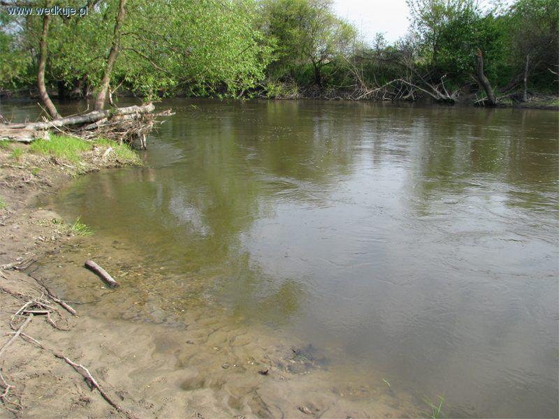 Rzeka Wieprz w okolicach Kijan
