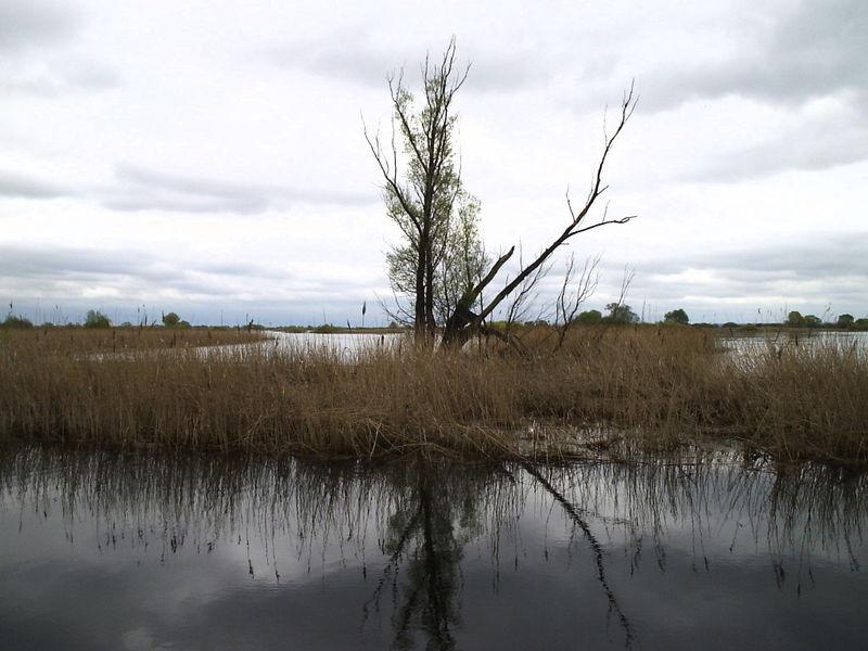 Rzeka Warta:  Gorzów - Kostrzyn (obw. 12) -  Lubuskie |  forum, pogoda - wedkuje.pl, ID: 4221