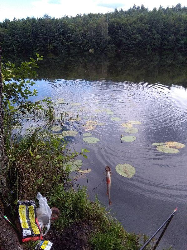Jezioro £obez - Szczecinecki Zachodniopomorskie    forum, pogoda - wedkuje.pl, ID: 21802