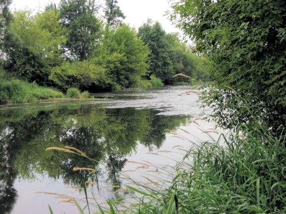 Rzeka Bzura od mostu w Koz³owie Szlacheckim do uj¶cia rz. Suchej (Nidy).