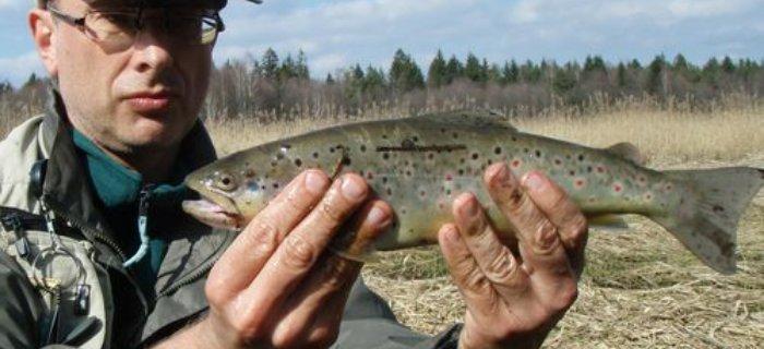 Z³ów i wypu¶æ - fakty i mity o wypuszczaniu ryb