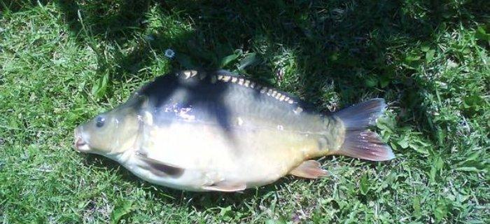 Pierwszy raz na rybach