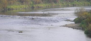 Rzeka Wis³oka w Przeczycy