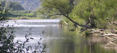 Rzeka Wis³oka w Brzostku