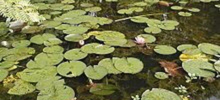 Pora na lina - �owienie lin�w na wiosne