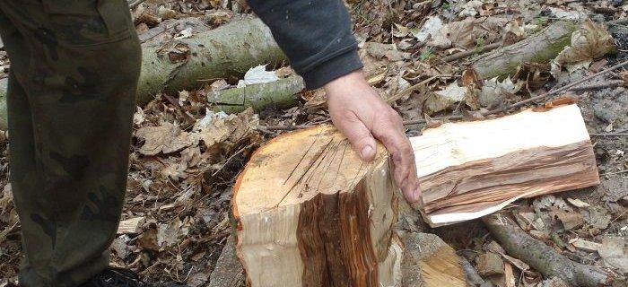 Przygotowanie solanki i drewna do w�dzenia ryby