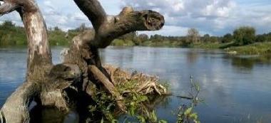 Rzeka Warta Sieraków