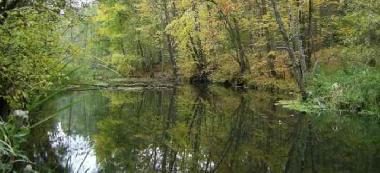 Rzeka St±¿ka - ¦wit