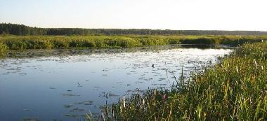 Doktorce - starorzecze rzeki Narew