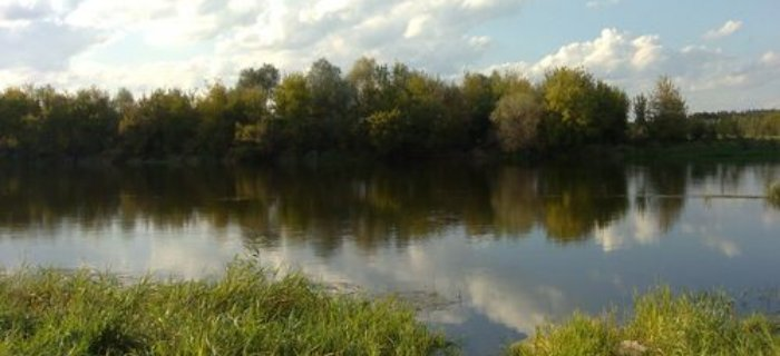 Ró¿an na rzece Narew