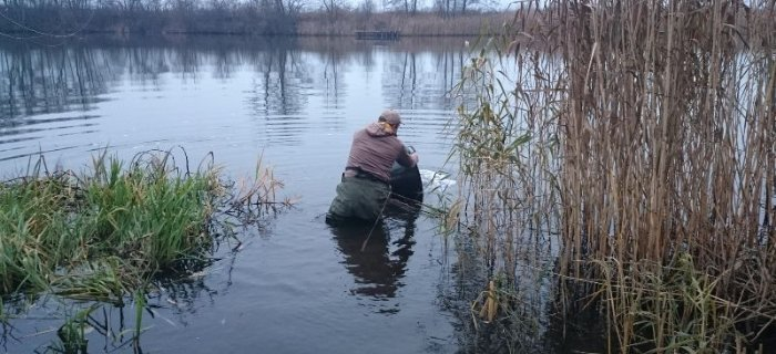 Zarybianie Jeziora Piwoniñskiego 2014 zakoñczone