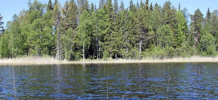 Gdzie �owi� szczupaka w maju w jeziorze