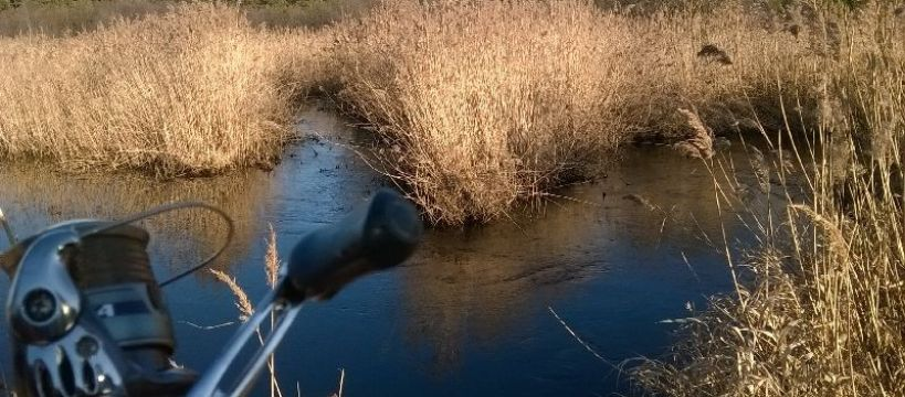 Wierna Rzeka spinning