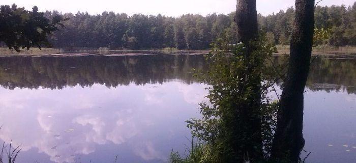 Jezioro Lubach (Lubartynia, Tarcza) - Szklarka Radnica
