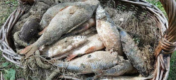 K�usownicy uj�ci dzi�ki informacji od stra�nik�w Spo�ecznej Stra�y Rybackiej