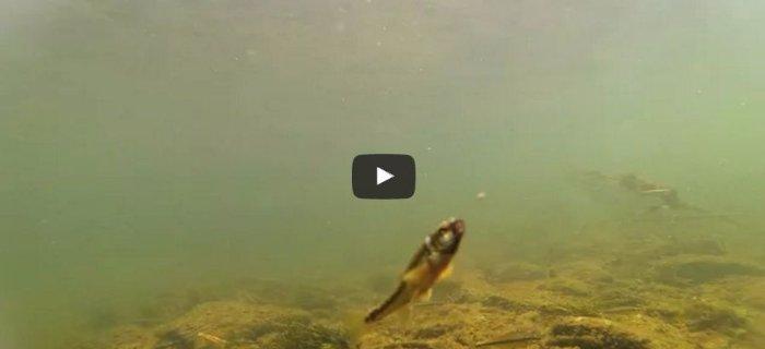 Podwodne ¿ycie w Sanie - FILM