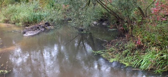 Okonie z ma³ej rzeki