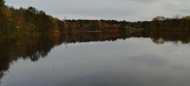 Jesienny drapie¿ca