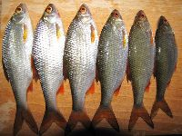 Kotlety rybne - zab³y¶nij w kuchni