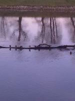 Rzeka Odra - od portu do ¶luzy Januszkowice