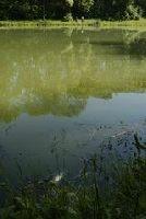 Staw Kobierzyce na ryby