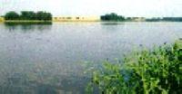 Jezioro Niepruszewskie - WIelkopolska