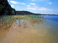 Jezioro �wi�cajty , okolice miejscowo�ci Ogonki