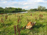 Rzeka Bug - Kamie�czyk