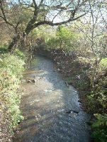 Rzeka D³ubnia