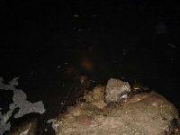 Nocne ³owienie na sp³awik