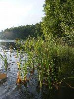 Jezioro Brzezinek Du�y