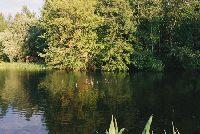Starorzecze rzeki Wilgi - NIECIECZ