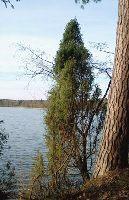Jezioro D³ugie Augustowskie (Kalejty)