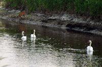 Rzeka Ner - Okolice �odzi