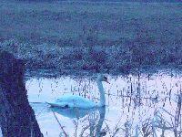 Tropienie ryb w jesiennych jeziorach