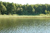Jezioro Rog�no - Lubelskie