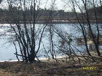 Rzeka Odra w okolicy Brzegu Dolnego