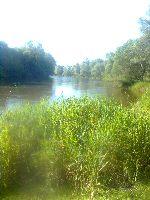 Rzeka Bug w miejscowo�ci �uki