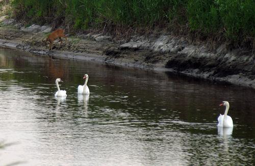 Rzeka Ner: od ¼ród³a - do Lutomierska (obw. 1) -  £ódzkie |  forum, pogoda - wedkuje.pl, ID: 1544
