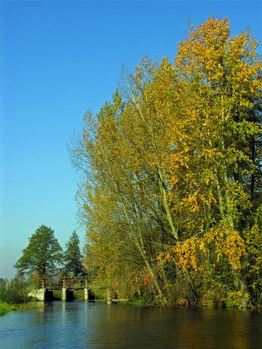 Rzeka Skierniewka
