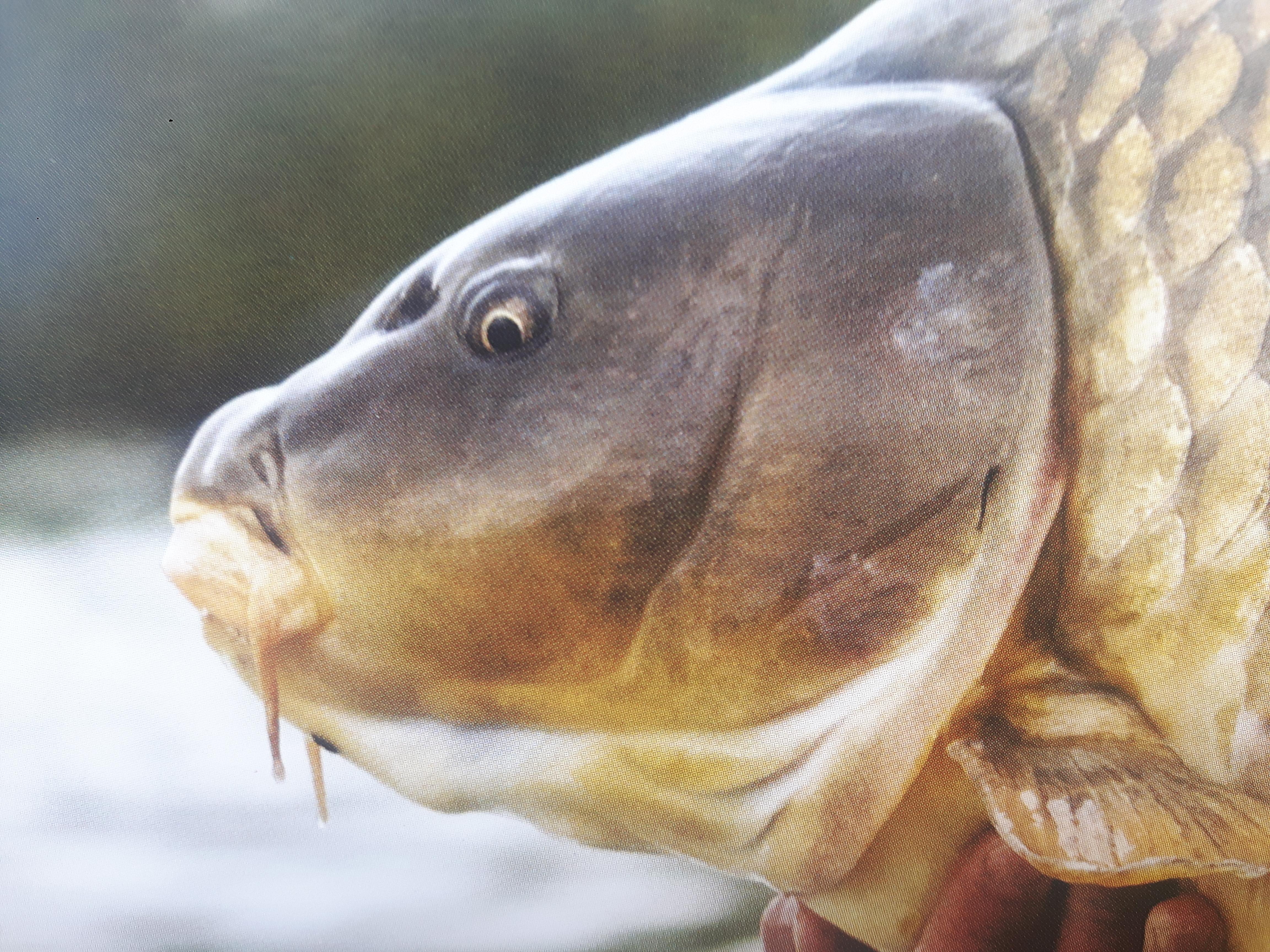 Ryby Ryby (Rybnieci...) (Ko³o PZW Nr 31 Starzyce w Tomaszowie Mazowieckim)  | Tomaszów Maz blog wêdkarski - wedkuje.pl