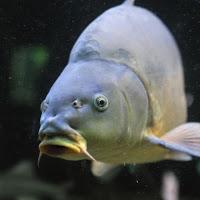 carp-fishing-team-siennica