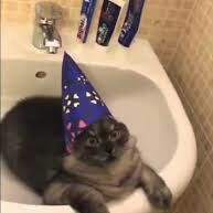 czarodziejski-kot